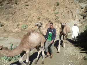 Camels Ourika