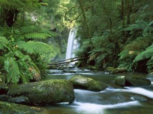 hopetoun falls aireriver otwaynationalpark