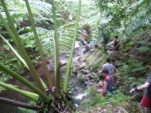 Cross-island trek through the jungle