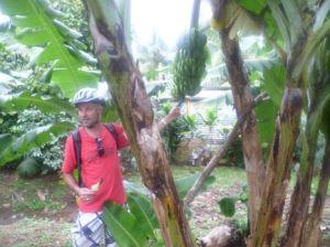 storytellers dave and banana tree
