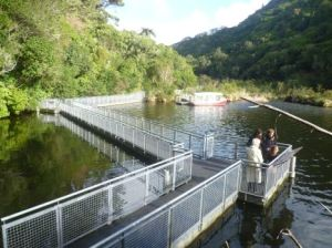 1Zealandia pontoon walk