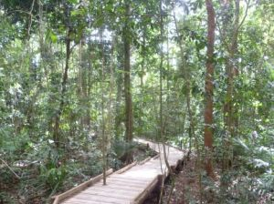 Danitree rainforest walk