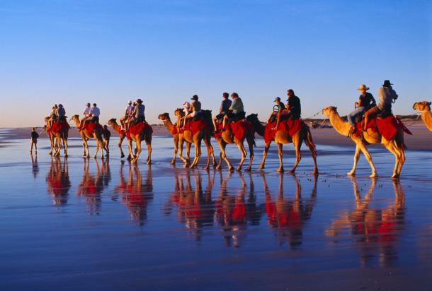 0Camels on Cable Beach